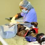Dr Julie Lavigne en chx