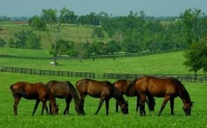chevaux au paturage